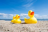 Rubber ducks on the beach, Baltic coast, Schleswig-Holstein, Germany, Europe