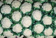 Cauliflowers Brassica oleracea.