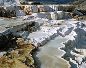 Sinter terraces near Mammoth, Yellowstone National Park, Rocky Mountains, Wyoming, USA