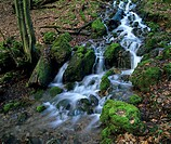 Moss_covered rocks in a forest stream, North Rhine_Westphalia, Germany, Europe
