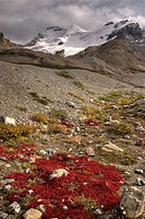 Columbia Icefield, Mount Athabasca, Jasper National Park, Jasper, Alberta, Canada