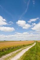 Clouds in blue sky over oat fields