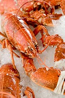 fresh cooked cardigan bay lobster seafood  for sale  in fishmonger´s shop in Aberaeron Ceredigon Wales UK