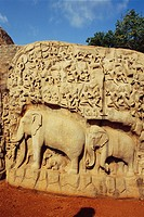 Elephant procession human & animal figures big bas_relief Arjuna´s penance , Mahabalipuram Mamallapuram Tamil Nadu , India