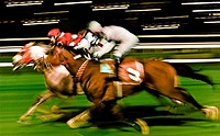 Horse race at racetrack, Istanbul. Turkey