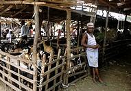 xipamanine market, maputo, mozambique, africa