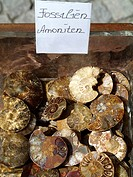 fossils, ammonite
