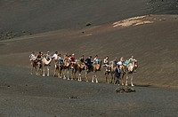 Camel safari in the National park Timanfaya, Lanzarote, Canary Islands, Spain