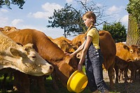 A teenage girl feeding cows