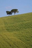 Italy, Europe, Tuscany, Toscana, hills, hill, scenery, landscape, nature, landscape, fields, coniferous, pine trees, a