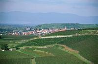 Vineyard Oberrottweiler Eichberg, Oberrottweil, Baden_Wurttemberg, Germany