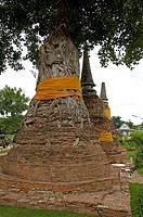 Tree is growing out of a 800 years old pagode, ayutthaya, thailand