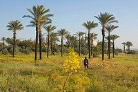 Woman hiking between palm trees, Hala Sultan Tekke mosque at Larnaka Salt Lake, Larnaka, South Cyprus, Cyprus