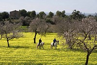 Couple Riding on Horses Through Wildflower Meadow, Near Randa, Mallorca, Balearic Islands, Spain