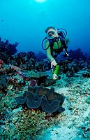 Diver and Giant Clam, Tridacna squamosa, Maldives, Indian Ocean, Meemu Atoll