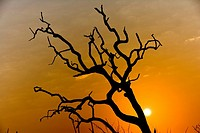 Tree silhouette behind sun at dawn
