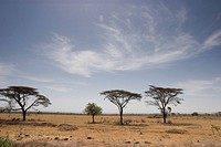 Ethiopia, Scenic view of lone trees on plain