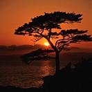 a Tree, Standing next to the Sea By Sunset, Front View, Kanagawa Prefecture, Japan