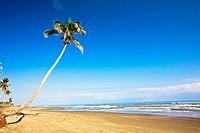 Palm tree on the beach, Ranch Beach, Papantla, Veracruz, Mexico (thumbnail)