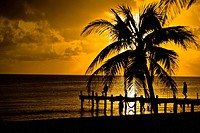Silhouette of a pier and a palm tree at a seaside, Punta Allen, Quintana Roo, Mexico