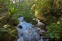 Stream flowing through a forest, Barranca Del Cupatitzio National Park, Uruapan, Michoacan State, Mexico