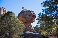 Low angle view of rock formations in a forest, Sierra De Organos, Sombrerete, Zacatecas State, Mexico