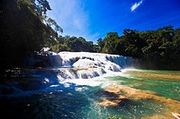 Waterfall in a forest, Agua Azul Waterfalls, Chiapas, Mexico