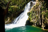 Waterfall in a forest, Tamasopo Waterfalls, Tamasopo, San luis Potosi, Mexico