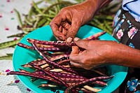 Close_up of a woman's hand podding dried beans, Hidalgo, Papantla, Veracruz, Mexico