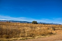 Dry grass on a landscape, Sombrerete, Zacatecas State, Mexico