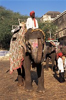 Elephant transport for tourists, Amber Palace, Jaipur, Rajasthan state, India, Asia