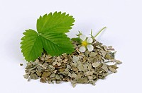 Wild strawberry leaves fresh and dried & strawberry flower