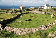Walled fields, Inishmore, Aran Islands, County Galway, Connacht, Eire Republic of Ireland, Europe