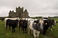 Dunbrody Abbey, Dumbrody, County Wexford, Leinster, Republic of Ireland Eire, Europe