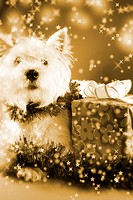 Cute white puppy with present and snowflakes