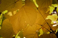 Beautiful background leaves Close_up photo