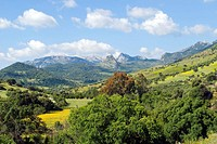 National Park near village of Grazalema, Cádiz, Andalucia, Spain