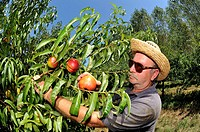 Farmer who collects peaches