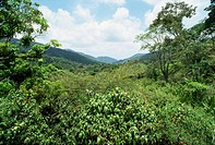 Asa Wright Nature Reserve, Trinidad, West Indies, Caribbean, Central America