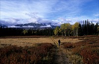 Man on a trail of Kluane Park Yukon