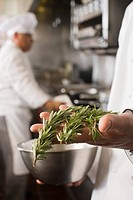 Chef with rosemary in hand