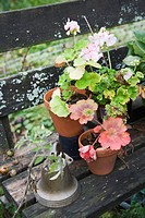 Geraniums in flower pots on wooden bench