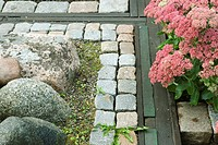 Flowering sedum in rock garden