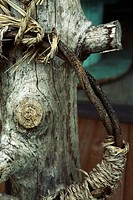 Rope entwined vines and tree trunk