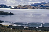 Charteris Bay, Lyttleton Harbour, Banks Peninsula, Canterbury, South Island, New Zealand, Pacific