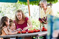family preparing salad of tomatoes in garden
