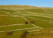 Dry stone walls above Malham, Yorkshire Dales National Park, Yorkshire, England, UK, Europe