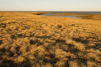 Moist sedge meadow along coastal wetlands. Teshekpuk Lake. National Petroleum Reserve. Spring Arctic Alaska.