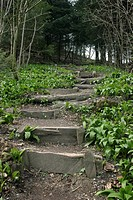 Naturstig, Steps In Forest