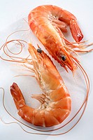 Entire cooked shrimps from a bio breeding